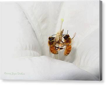 Canvas Print featuring the photograph Two Busy by Joyce Dickens