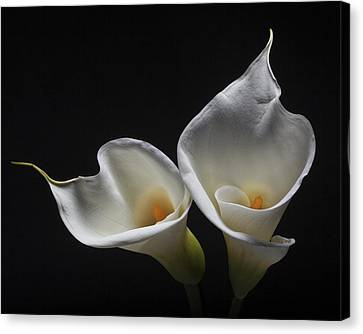 Two Calla Lilies Canvas Print by George Oze