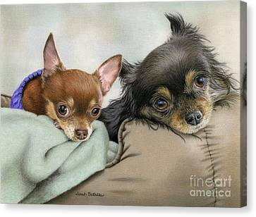 Long Bed Canvas Print - Two Chi's In A Pod by Sarah Batalka