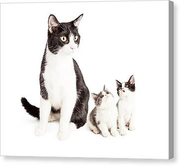 Litter Mates Canvas Print - Two Cute Kittens Looking Up At Mom Cat by Susan Schmitz