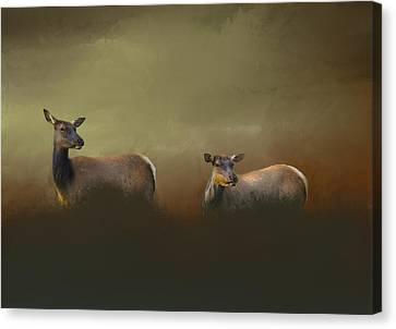 Two Deers Canvas Print