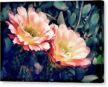 Canvas Print featuring the photograph Two Desert Blooms Apricot Glow by Julie Palencia