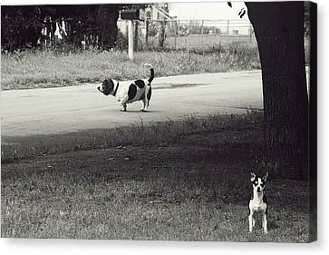 Two Dogs Canvas Print by Toni Hopper