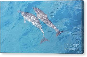 Canvas Print - Two Dolphins by Karen Nicholson