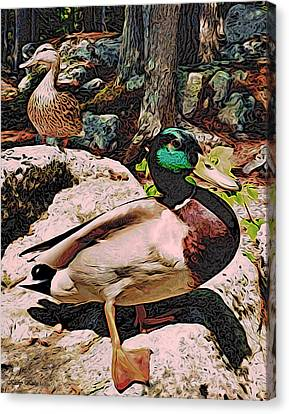 Canvas Print featuring the photograph Ducks -dynamic Duo by Kathy Kelly