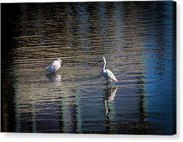 Two Egret's Fishing Canvas Print by Garry Gay