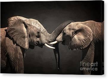 Two Elephants Canvas Print by Angela Doelling AD DESIGN Photo and PhotoArt