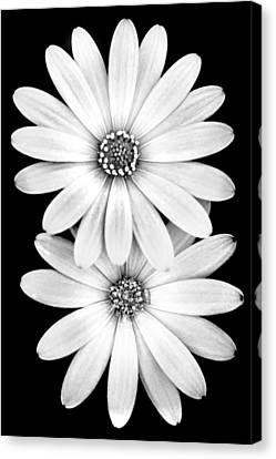 Two Flowers Canvas Print by Az Jackson