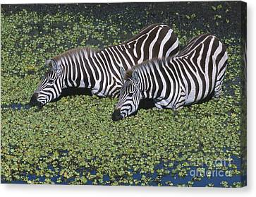 Two For Lunch Canvas Print by Sandra Bronstein