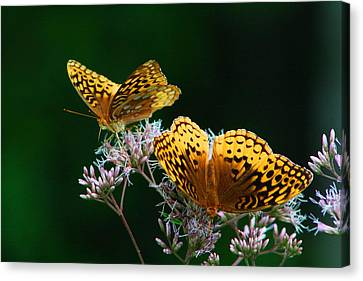 Two Fritillaries Canvas Print