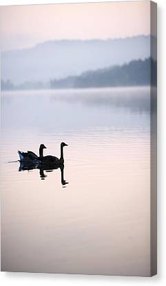 Two Geese On Lake With Fog And Forested Canvas Print