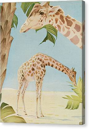 Two Giraffes Canvas Print by Art Museum