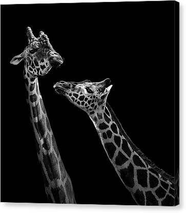 Two Giraffes In Black And White Canvas Print