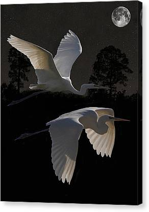 Two Great Egrets In Flight Canvas Print by Eric Kempson