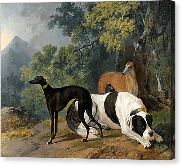 Two Greyhounds And A Mastif Belonging To The Duke Of Hamilton Canvas Print