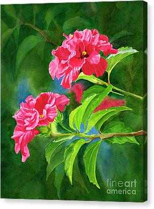 Dark Pink Canvas Print - Two Hibiscus Rosa Sinensis Blossoms With Background by Sharon Freeman