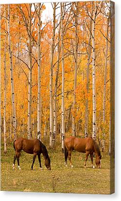 Two Horses Grazing In The Autumn Air Canvas Print by James BO  Insogna