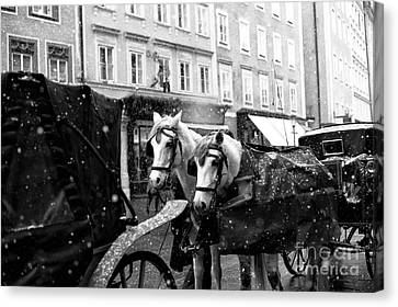 Two Horses In Salzburg Canvas Print by John Rizzuto