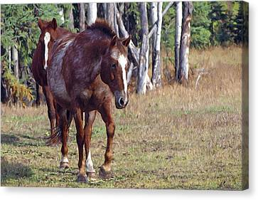 Two Horses Canvas Print by Sharon Talson