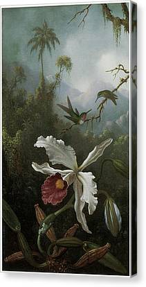 Two Hummingbirds Above A White Orchid Canvas Print by Martin Johnson Heade