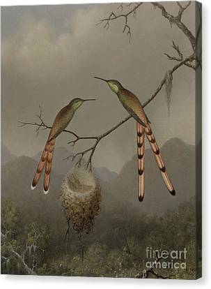 Two Hummingbirds With Their Young Canvas Print