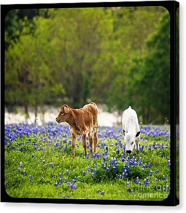 Two In Blue Canvas Print