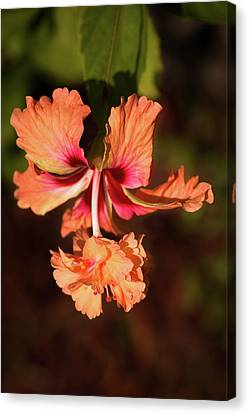 Hibiscus Canvas Print - Two In One by Zina Stromberg