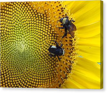 Canvas Print featuring the photograph Two Is Company by Virginia Coyle