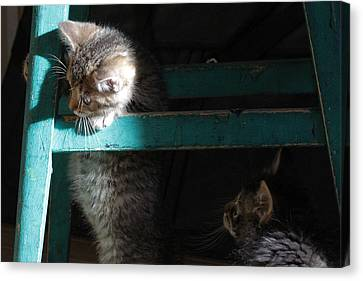 Canvas Print featuring the photograph Two Kittens With Turquoise Chair by Doris Potter