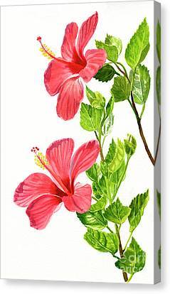 Two Light Red Hibiscus Flowers Canvas Print