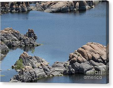 Two Lone Trees At Granite Dells Canvas Print by Anne Rodkin