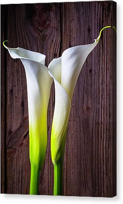 Two Lovely Calla Lilies Canvas Print by Garry Gay