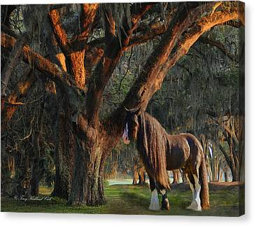 Two Majestic Souls Canvas Print by Terry Kirkland Cook