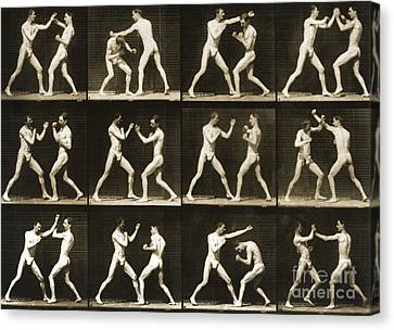 Two Men Boxing Canvas Print by Eadweard Muybridge