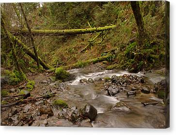 Two Mossy Logs  Canvas Print by Jeff Swan