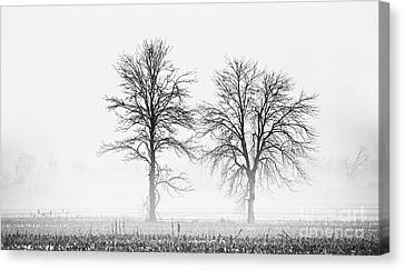 Canvas Print featuring the photograph Two... by Nina Stavlund