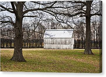 Two Oaks White Kentucky Barn Canvas Print by Greg Jackson