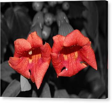 Canvas Print featuring the photograph Two Of Hearts by Maggy Marsh
