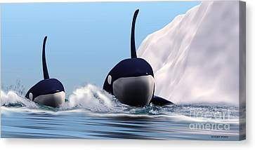 Two Orca Whales Canvas Print by Corey Ford