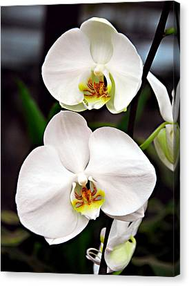 Canvas Print featuring the photograph Two Orchids by JoAnn Lense