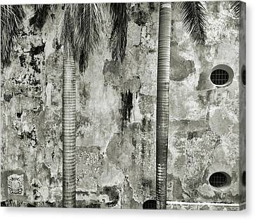 Two Palms, Version II 40x30 Canvas Print by Michael Evans