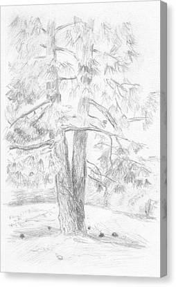 Two Pine Trees Canvas Print by Masha Batkova
