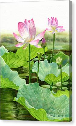 Two Pink Lotus Blossoms With Bud Canvas Print