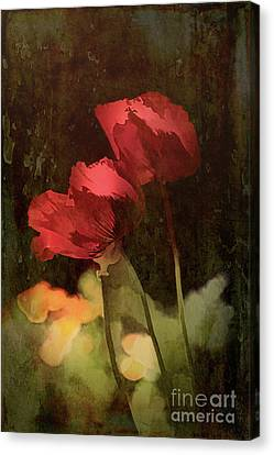 Two Poppies Canvas Print by Elaine Teague