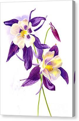 Two Purple Columbine Flowers Canvas Print by Sharon Freeman