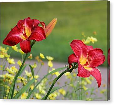 Living Room Decor Canvas Print - Two Red Daylilies by Angela Murdock