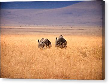 Two Rhino's Canvas Print by Adam Romanowicz