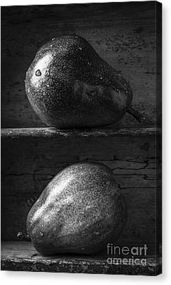 Wooden Box Canvas Print - Two Ripe Pears In Black And White by Edward Fielding