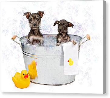 Two Scruffy Puppies In A Tub Canvas Print by Susan Schmitz