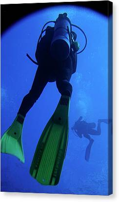 Two Scuba Divers Swimming Canvas Print by Sami Sarkis